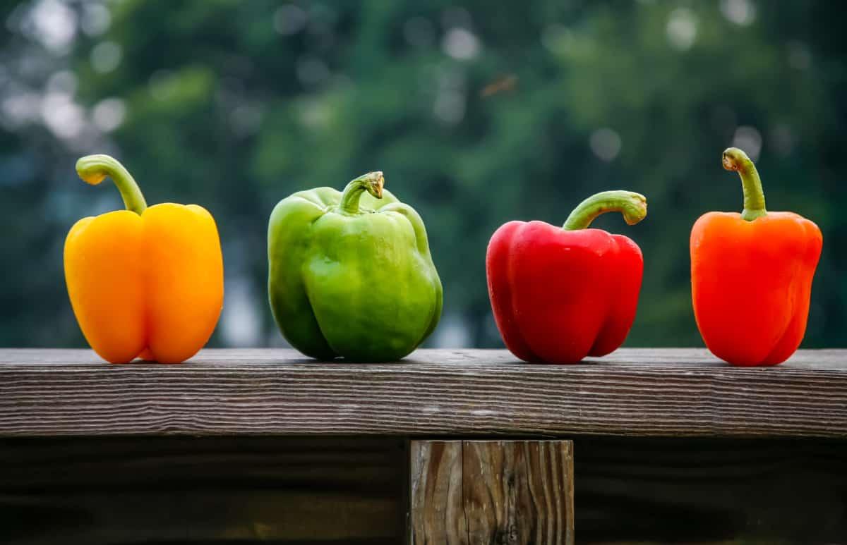 Die Farben der Paprikaschoten erklärt